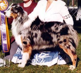 Australian shepherd blueprint moon dancer id 1514 aristocrats once ina blue moon malvernweather Images